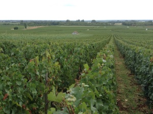 Les Genevrieres Home to the best Meursault vines!