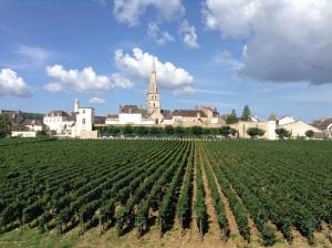 Meursault from Chateau de Citeaux La Cueillette